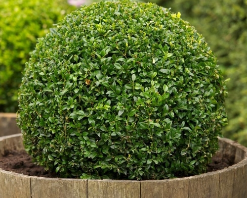 arbustos-para-jardim-curitiba-arbustos-para-jardinagem-curitiba