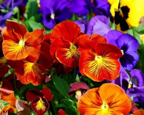 pedras jardim curitiba:flores-para-jardim-curitiba-flor-para-jardinagem-curitiba