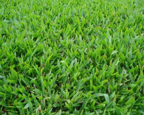 grama-sao-carlos-grama-para-jardinagem-curitiba